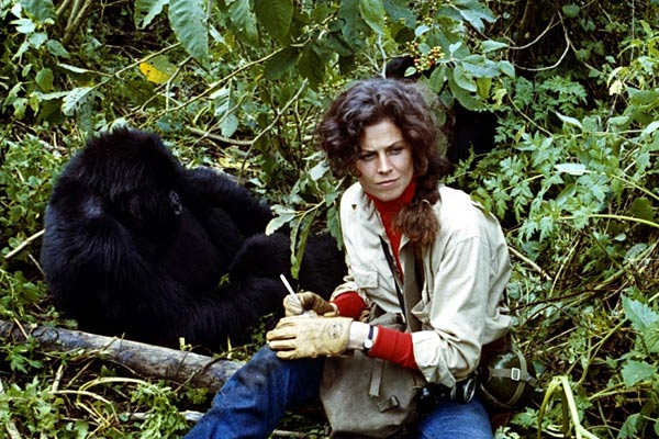 Gorilles dans la brume | Passion Cinéma