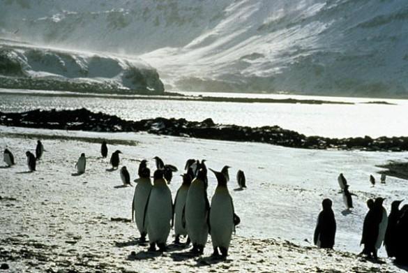 Le Congrès des pingouins